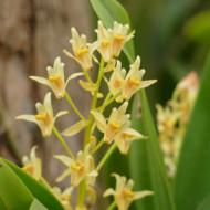 Une très belle collection d'orchidées