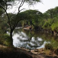 Crocodile et hippopotames