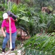 Maria et ses palmiers