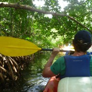 passage dans la mangrove en kayak