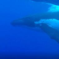Rencontre magique avec la baleine