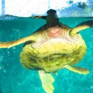 Joli bac en extérieur pour les tortues