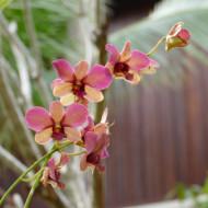 Un superbe jardin fleuri