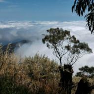 Mer de nuage à Pico Da Cruz