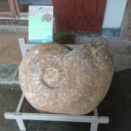 musée des fossiles