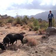 Elevage porcin de Laurent sur le plateau de transumance
