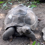 Mais aussi un beau jardin avec tortues et maison coloniale