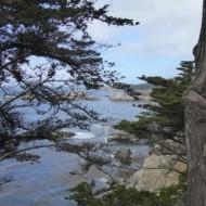 Point Lobos state park